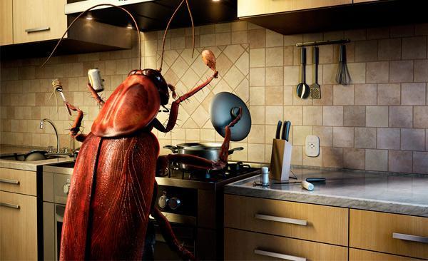 Как не дать тараканам стать хозяевами на кухне
