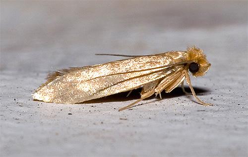 Крылья насекомого