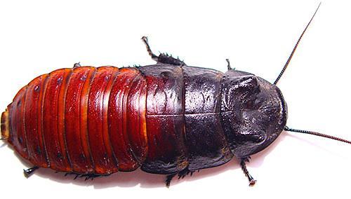 Экзотическое насекомое