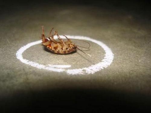 Мелок убивает тараканов наповал