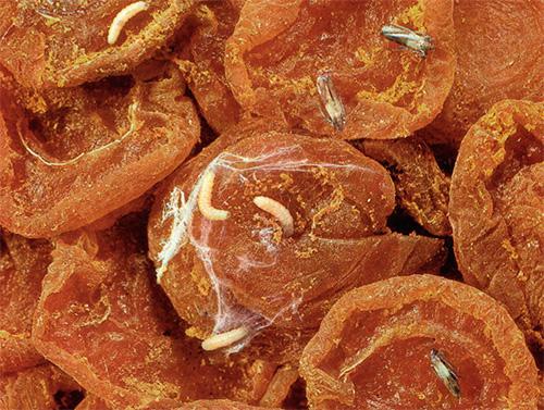 Насекомое и его личинки в продуктах