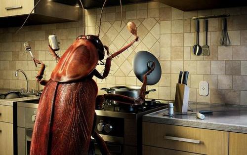 Когда-то тараканы были хозяевами на многих кухнях