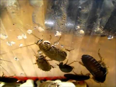 Передвижение тараканов