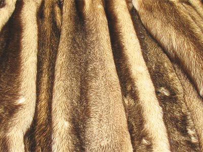 Вред меховым изделиям, наносимый молью