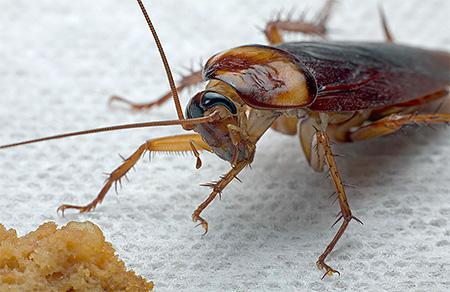 Домашний паразит