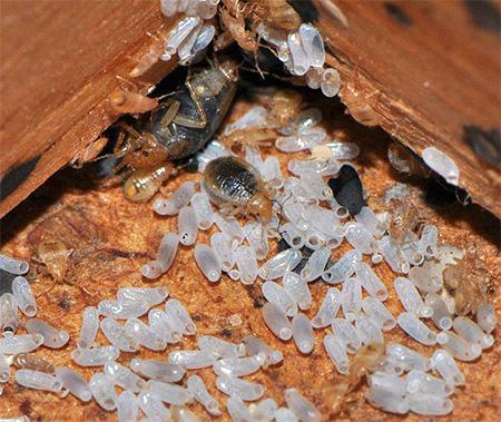 Гнездо насекомых
