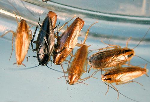 Молодые и взрослые насекомые