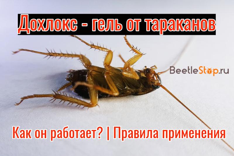 Дохлокс от тараканов