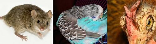 Паразиты птиц и грызунов
