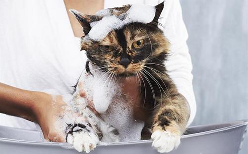 Мытье животных шампунем