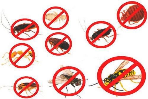Средство против многих насекомых