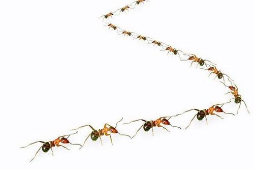 Колона муравьев