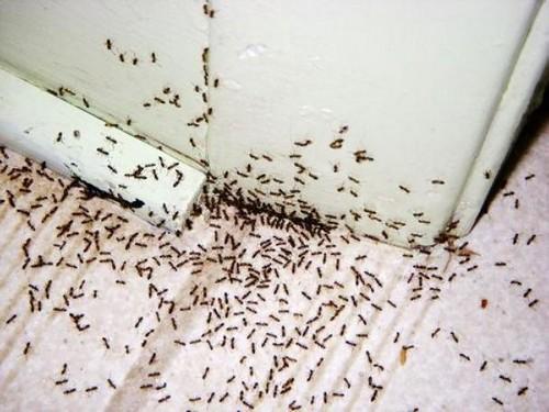 Нашествие насекомых