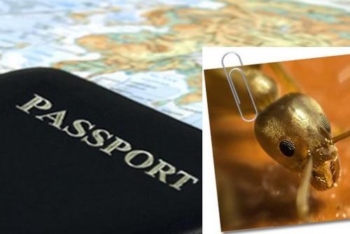 Паразиты путешествуют по миру