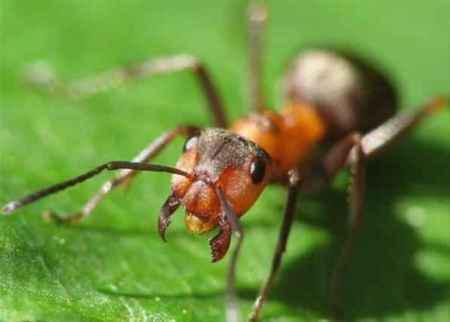 Удивительные муравьи