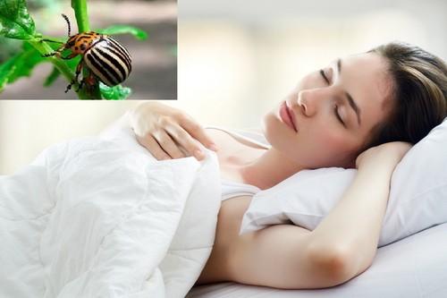 Сон о колорадских жуках
