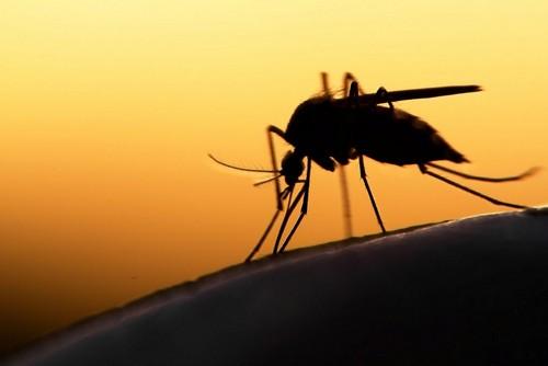 Если приснился комар...