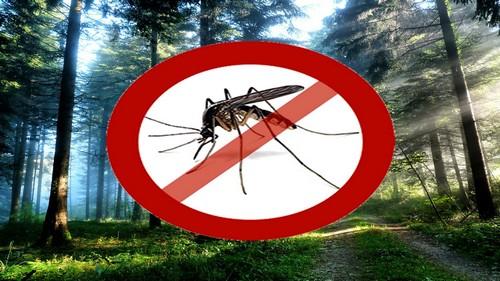 Как уберечься от комаров