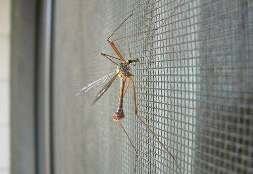 Сетка - защита от комаров