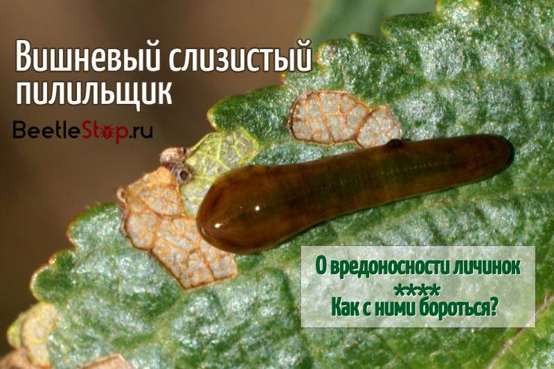 Личинка на листе