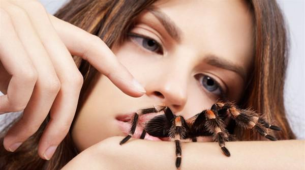 К чему снится большой черный паук мужчине