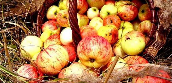 Подпорченные яблоки