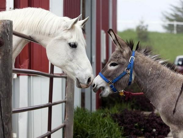 Лошадь и ослик