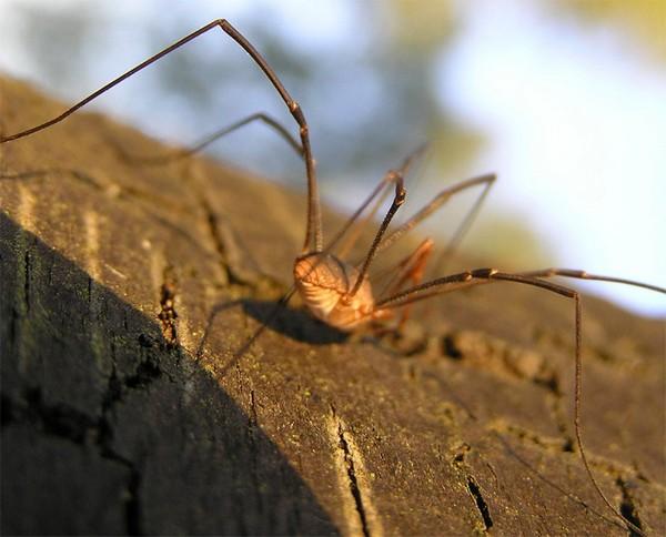 У этого паукообразного идеальный механизм передвижения