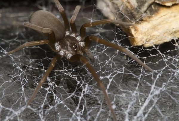 Отшельник на паутине