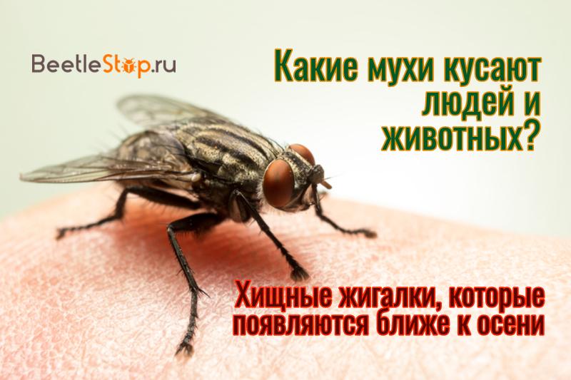 Почему кусаются осенью мухи?
