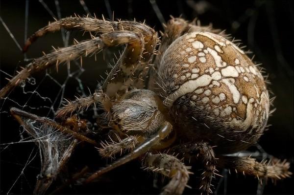 Серьезный паук