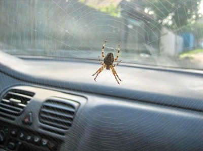 Паук в машине