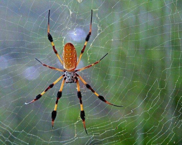 Пауки - удивительные создания, которые могут и пугать, и восхищать