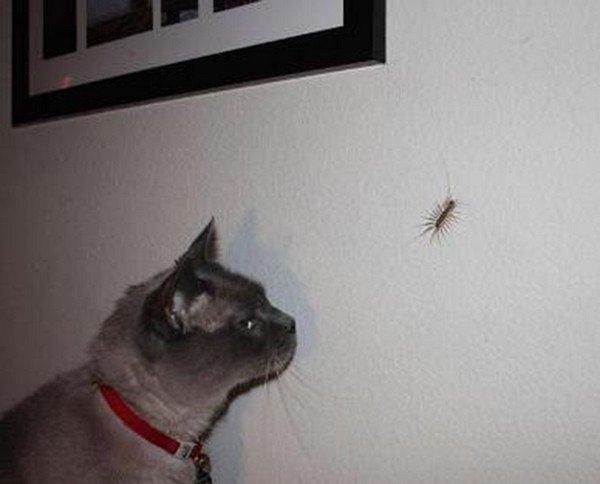 Знакомство кота и мухоловки