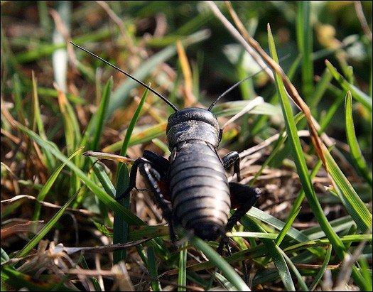 Насекомое в траве