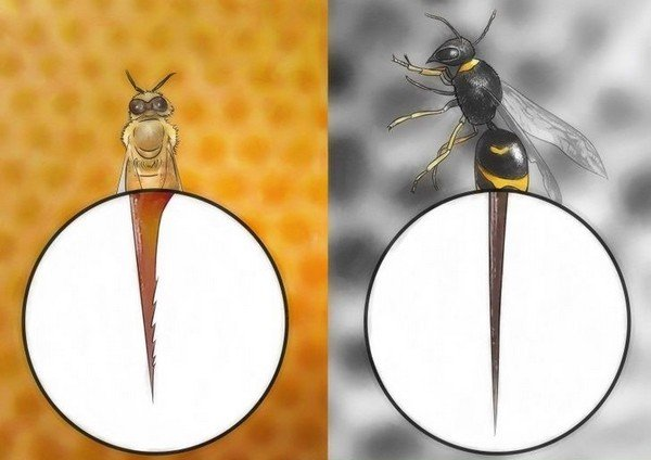Разница между жалами насекомых