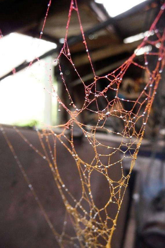 Сеть, сплетенная пауком
