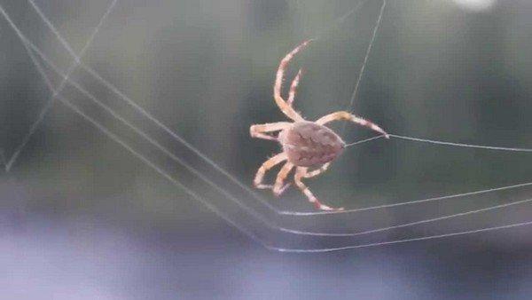 Паук, плетущий паутину