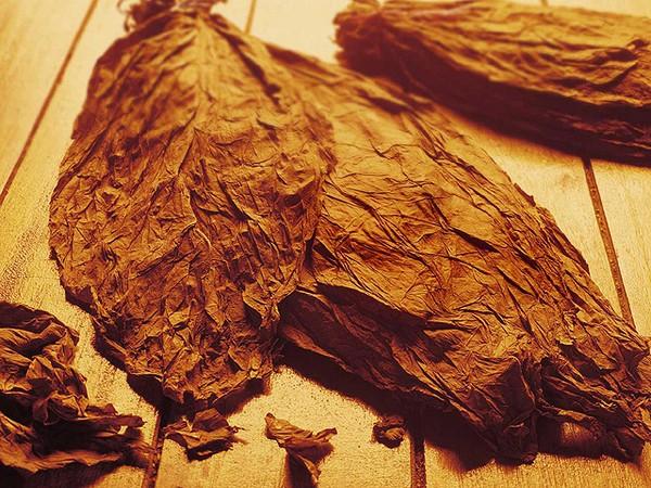 Табачный лист