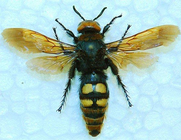 Еще один вид насекомого