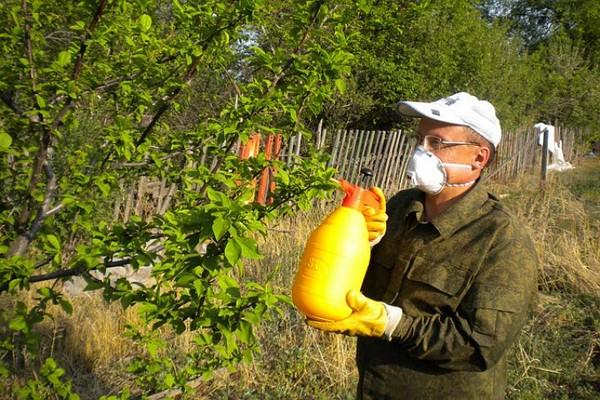 Опрыскивание листвы