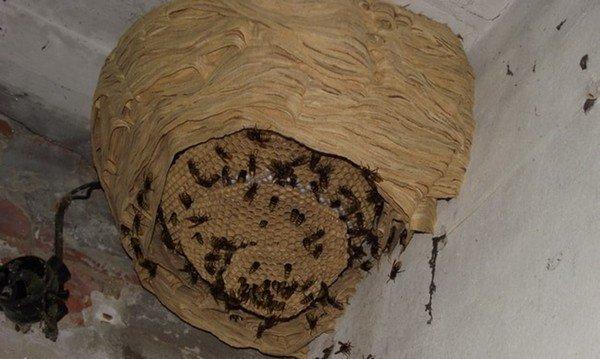 Дом насекомых