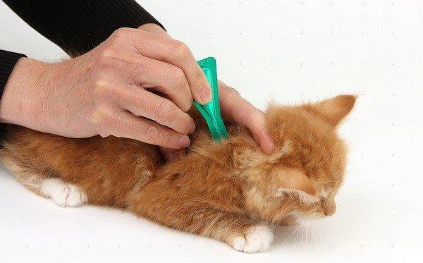 Капли от клещей для кошек: правила применения