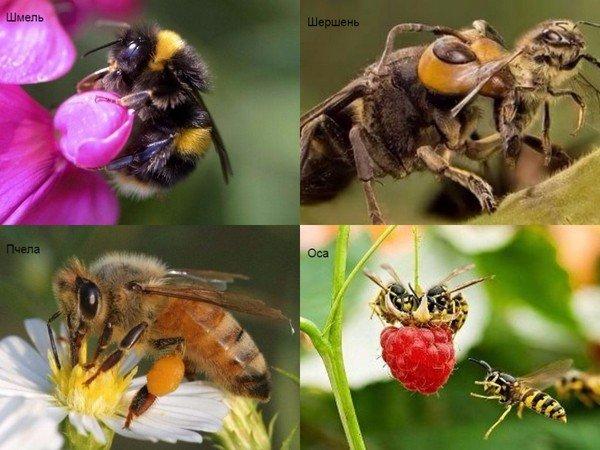 Питание пчел и ос