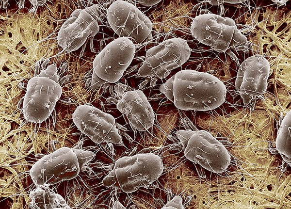 Скопление паразитов