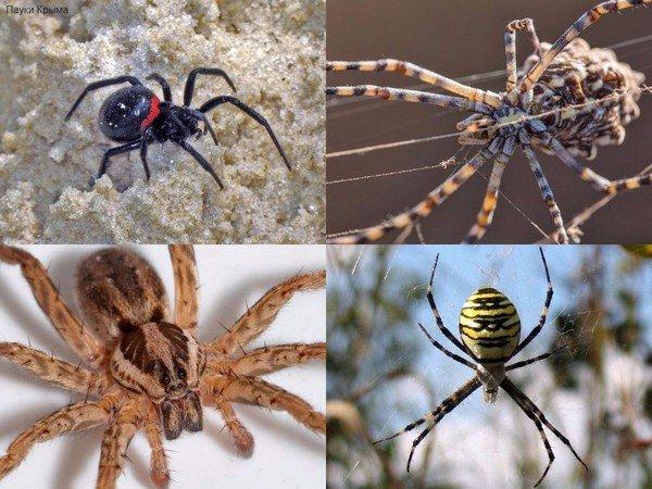 Разные пауки