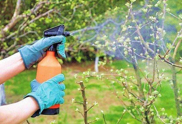 Опрыскивание садовых культур