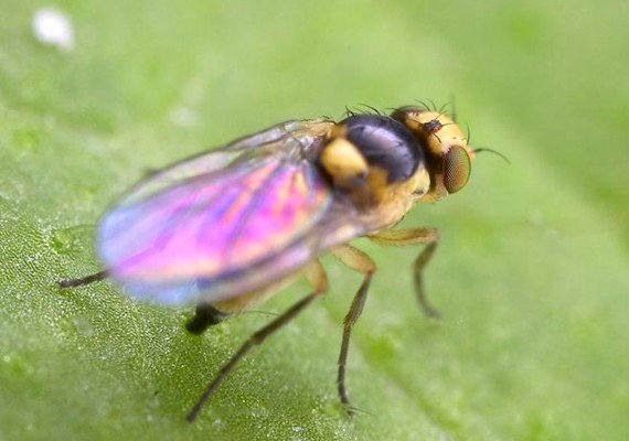Это насекомое не лишено красоты