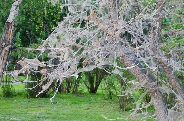 Поврежденное дерево