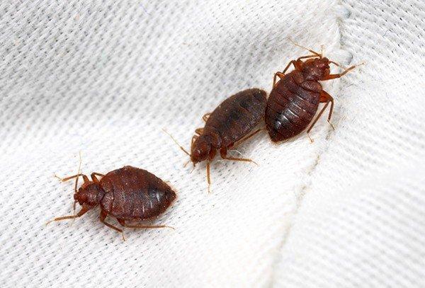 Мелкие паразиты